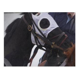 Postal del caballo de raza