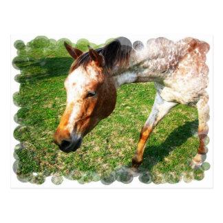 Postal del caballo del Appaloosa