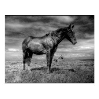Postal del caballo oscuro