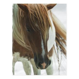 Postal del caballo salvaje del mustango