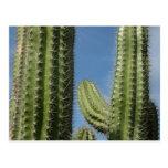 Postal del cactus de barril