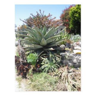 Postal del cactus de Vera del áloe