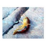 Postal del camarón del bebé