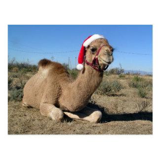 Postal del camello del navidad