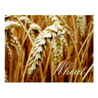 Postal del campo de trigo
