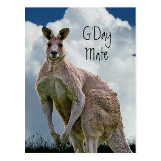 Postal del canguro del compañero de G'Day