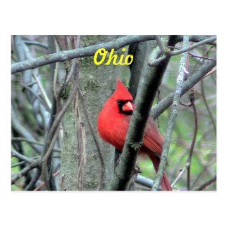 Postal del cardenal de Ohio