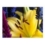 Postal del centro de flores del lirio