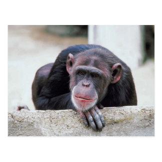 Postal del chimpancé