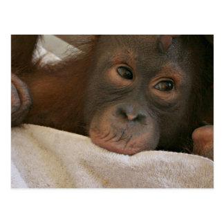Postal del chimpancé del bebé