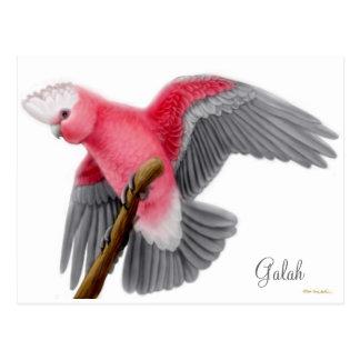 Postal del Cockatoo de Galah