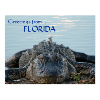 Postal del cocodrilo de la Florida