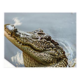Postal del cocodrilo de Luisiana