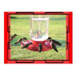 Postal del colibrí