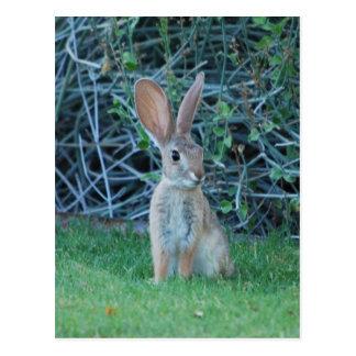 Postal del conejito del conejo de rabo blanco