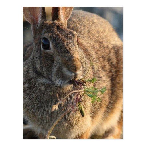 Postal del conejo