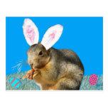 Postal del conejo de rabo blanco de Melvin