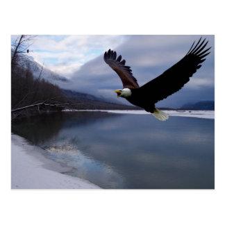 Postal del coto de Chilkat Eagle