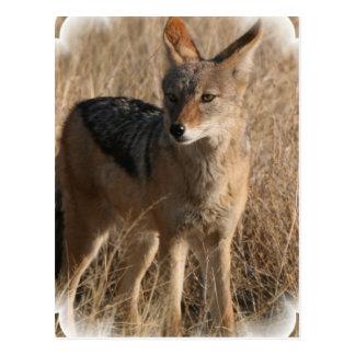 Postal del coyote de Navajo