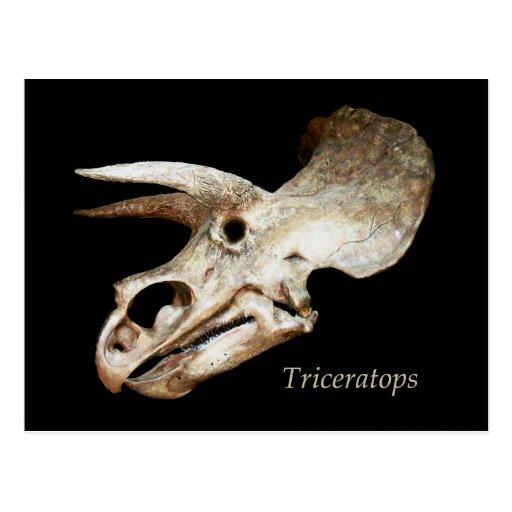 Postal del cráneo del Triceratops