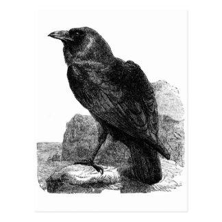 Postal del cuervo