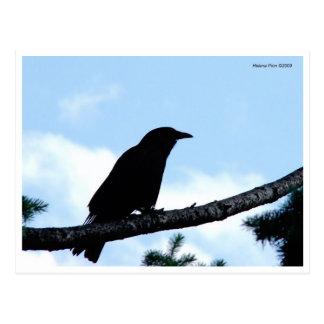 Postal del cuervo del color