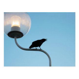 Postal del cuervo que habla