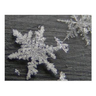 Postal del ~ de la escama 45 de la nieve