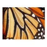 Postal del ~ del ala del monarca
