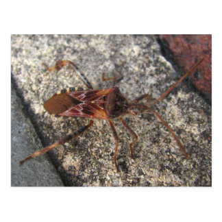 Postal del ~ del insecto de asesino
