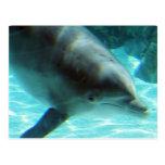 Postal del delfín común