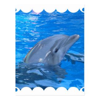 Postal del delfín de Bottlenose