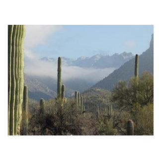 Postal del desierto de Tucson