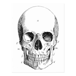 Postal del diagrama del cráneo