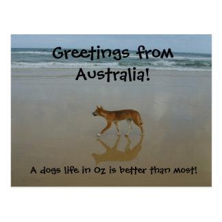 Postal del Dingo
