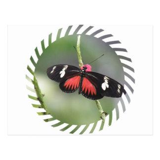 Postal del diseño de la foto de la mariposa