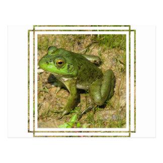 Postal del diseño de la rana