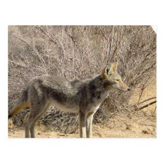 Postal del diseño del coyote