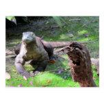 Postal del dragón de Komodo (0606)