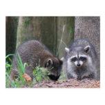Postal del dúo del mapache