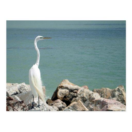Postal del Egret nevado