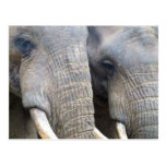 Postal del elefante