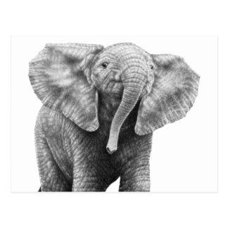 Postal del elefante africano del bebé
