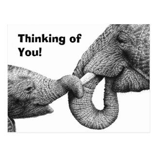 Postal del elefante africano y del becerro