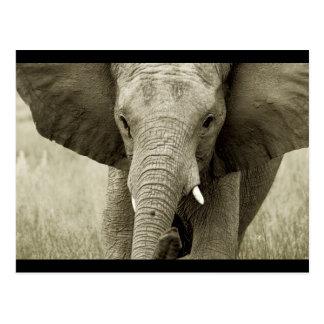 Postal del elefante de Bull del africano (modifiqu