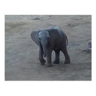 Postal del elefante del bebé - por la sabana del