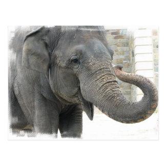 Postal del elefante el tocar la trompeta