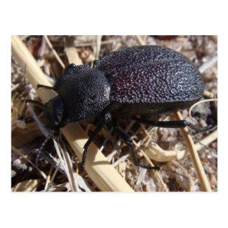 Postal del escarabajo de tierra