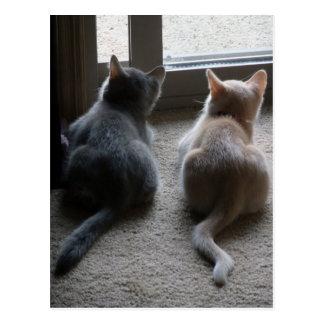 Postal del espacio en blanco del jaspe y del gatit