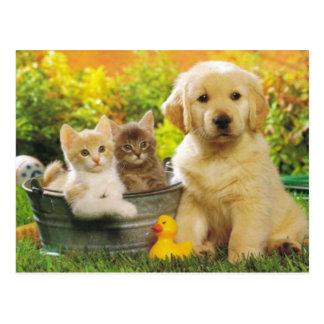Postal del espacio en blanco del perro del gatito